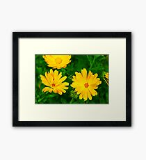 Flowers 10 Framed Print