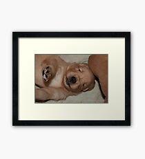Adorable Golden Pups 3 Framed Print