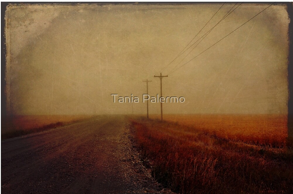 the soul of the road by Tania Palermo