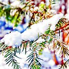 Colours in the Snow by Vicki Field