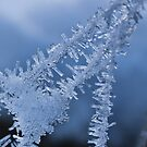 Ice Crystals on Web by Ubernoobz