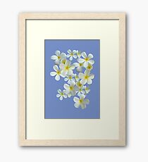 Frangipani - White and Yellow Framed Print