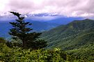 Yellow Face Overlook - Blue Ridge Parkway by Bill Wetmore