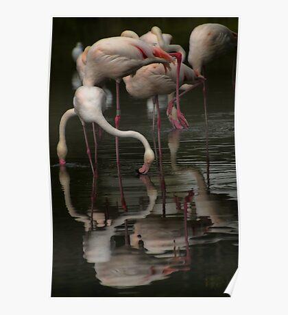 More Flamingos Poster