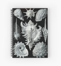Ernst Haeckel Seashells Spiral Notebook