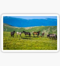 Herd Of Horses high In The Mountains Sticker