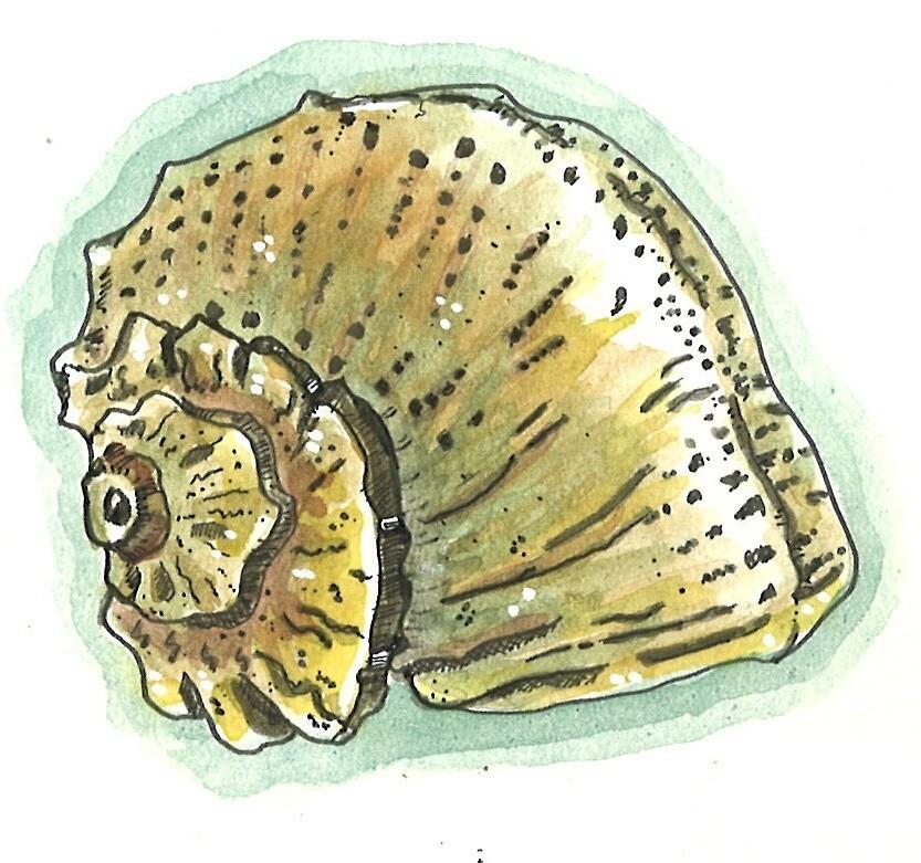 «Sea Snail» de laramaktub