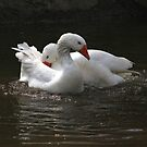 Goose couple by turniptowers