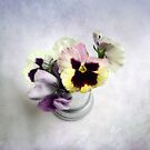 Winter Pansies by LouiseK