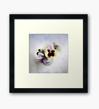 Winter Pansies Framed Print