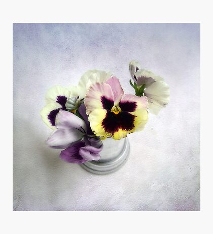 Winter Pansies Photographic Print