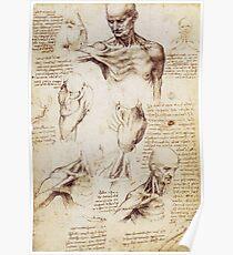 Shoulder and Neck sketches by Leonardo Da Vinci Poster