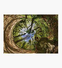 Squirrel Sculpture in Prehen Woods, Derry - Sky In Photographic Print