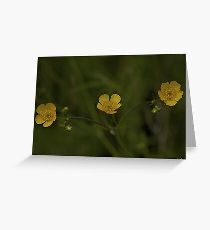 Three Meadow Buttercups - Burntollet Woods, County Derry Greeting Card