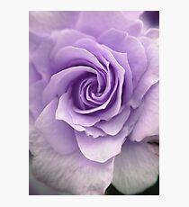 Purple Rose Photograph Photographic Print