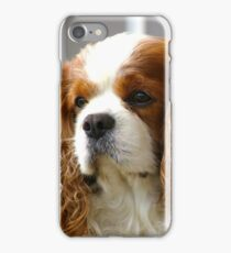 Bosse the Cavalier iPhone Case/Skin