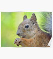 Cute squirrel close-up Poster