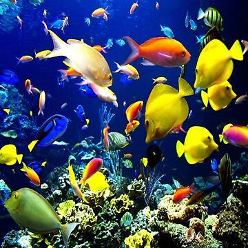 Coral reef by maya51