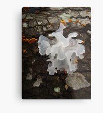 Pretty, frilly fungus (Tremella fuciformis) Metal Print