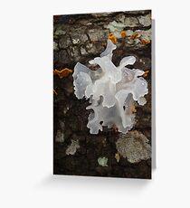 Pretty, frilly fungus (Tremella fuciformis) Greeting Card