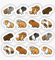 Guinea Pig Procession Sticker