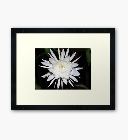 Queen of the Night Framed Print