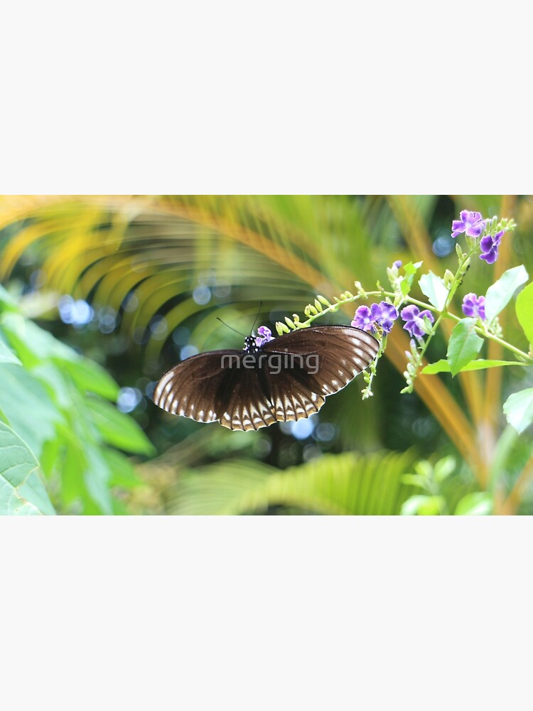 Butterfly by merging