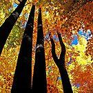 Keep Looking Up by Terri~Lynn Bealle