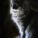 Backlit Kitty by Carolyn  Fletcher