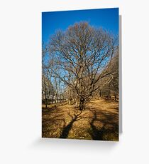 Very large oak trees Greeting Card
