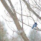 Winter Blues by Johanne Brunet