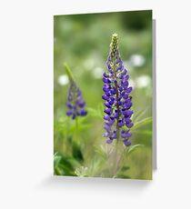 Lupin Blooms Greeting Card