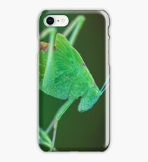 Young Bush-Cricket 2 iPhone Case/Skin