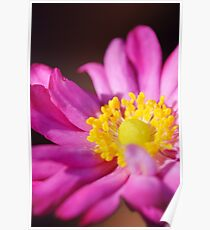 Morning Flower: Macro Photography Poster