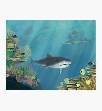 Underwater Reef Photographic Print