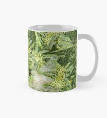 Four Stages of Longhorn Milkweed, or Zizotes Milkweed Mug