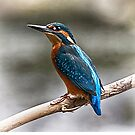 Kingfisher Perch by Andy Beattie