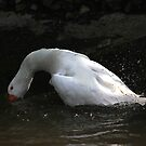 Diving goose by turniptowers