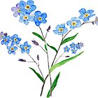 blue forget me not 2 by ColorandColor