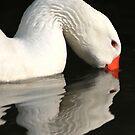 Feeding goose by turniptowers