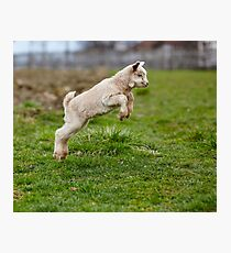 Baby goat jumping Photographic Print