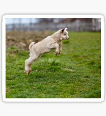 Baby goat jumping Sticker
