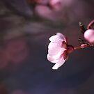 Blossom Days by Joy Watson