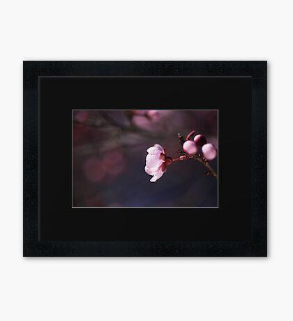 Blossom Days Framed Print