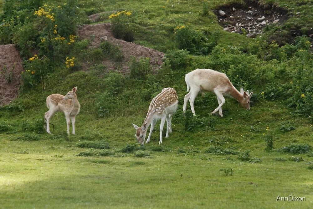 Fallow Deer Family by AnnDixon