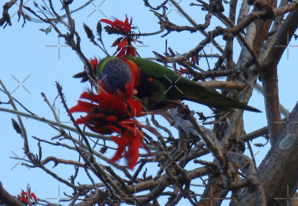 Rosella high in the tree by KazM