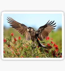 Carnaby's Black-Cockatoo Sticker