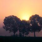 Misty Trees by IanMcGregor