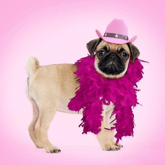 Pug dog wearing a feather boa and cowboy hat