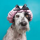 Wet Dog, Benji by Sophie Gamand